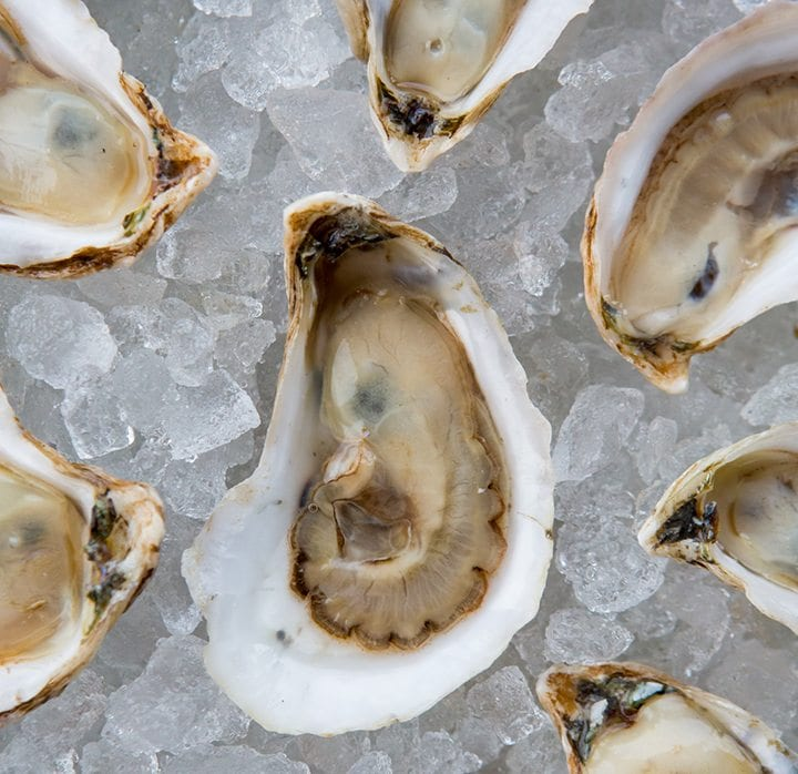 Shuck It: Oysters 101